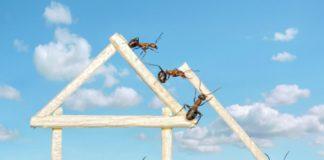 intervenire contro le formiche in casa
