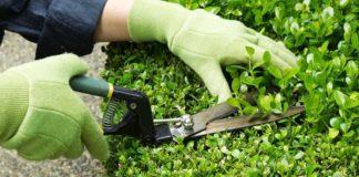 preventivo giardiniere