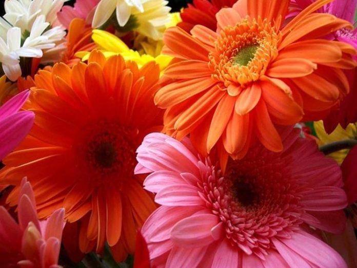 Fiori Arancioni.Fiori Arancioni Quali Sono Gerbere Rosa Giglio E Tanti Altri