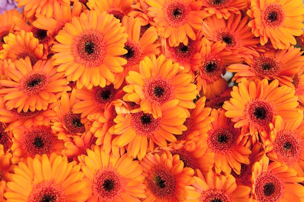 Fiori Arancioni Nomi.Fiori Arancioni Quali Sono Gerbere Rosa Giglio E Tanti Altri