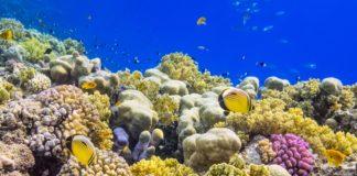 puglia, monopoli, scoperta una barriera corallina