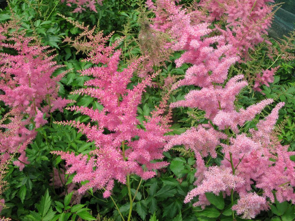 Piante Piccole Da Giardino piante da giardino con fiori, riempire il giardino di colori