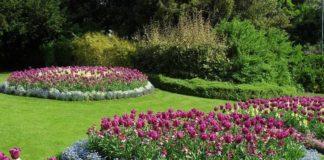 Piante da giardino con fiori