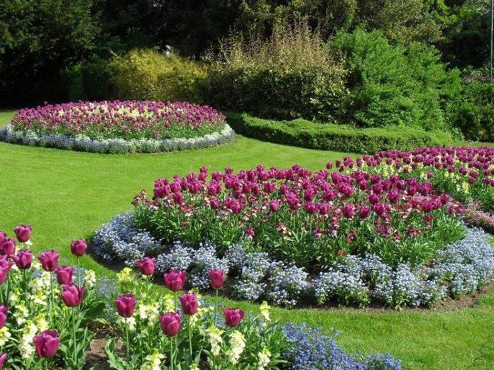 Fiori Da Giardino.Piante Da Giardino Con Fiori Riempire Il Giardino Di Colori E Profumi