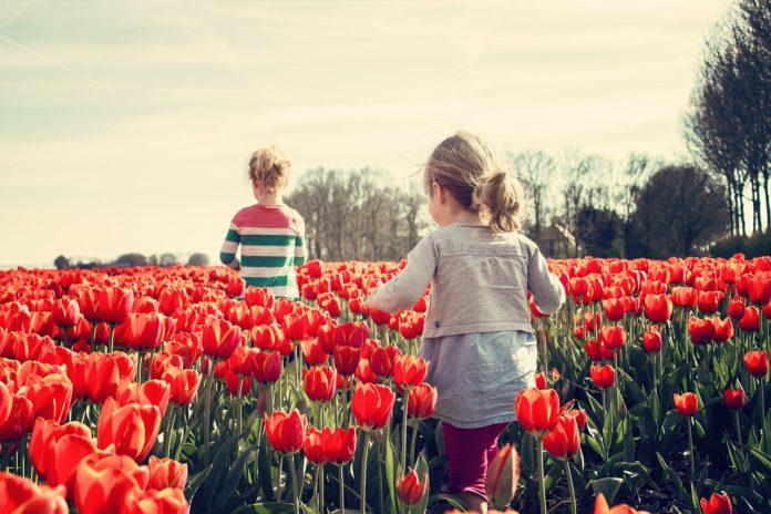 curare i tulipani
