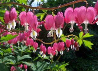 piante per giardini umidi