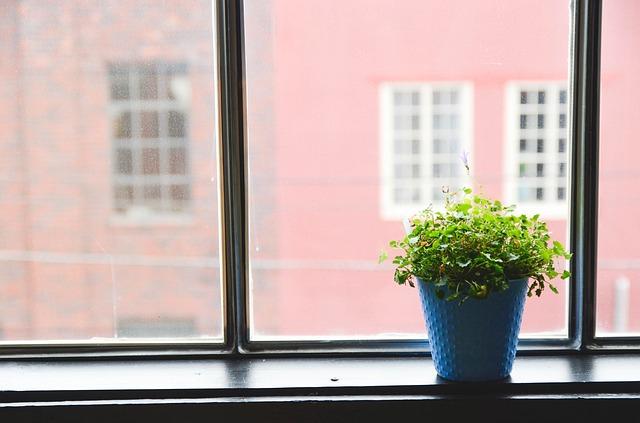 risolvere inquinamento domestico con le piante