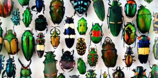 insetti